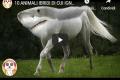 10 ANIMALI IBRIDI DI CUI IGNORAVI L'ESISTENZA