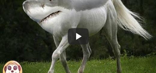 Top 10 animali ibridi - in questo video vi mostreremo 10 animali ibridi veri di cui ignorate del tutto la loro esistenza, e sono stati ripresi da persone comuni.