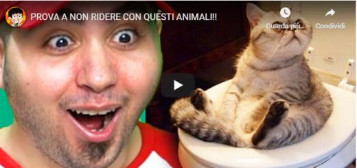 In questo tutorial vi metteremo alla prova, se riuscirete a non ridere guardando questi strani animali.