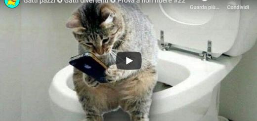 Gatti pazzi e divertenti - in questo video vi mostreremo uno video divertentissimo sui gatti più pazzie e divertenti mai visti nel web, prova a non ridere.
